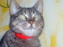 A minha gatinha SIOUXIE