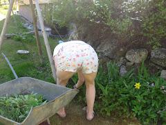 paparazzi puutarhassa