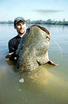 FISHING AFIELD: Big Catfish -- Catch-em if you can Giant Flathead Catfish