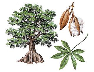 Ceiba pentandra y su relacion con la fauna