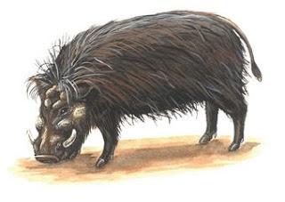 hiloquero Hylochoerus meinertzhageni