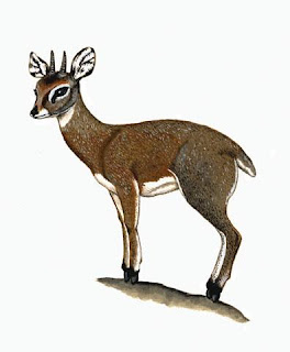 antilope saltarrocas Oreotragus oreotragus