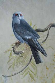 gavilan azulado chico Ictinia mississipiensis presas de Ictinia