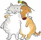 Cat&Dog?
