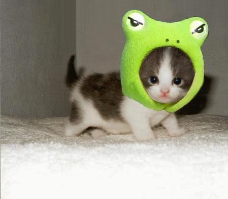 [frog+kitty]