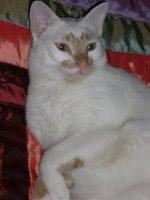 El meu gat Rovello