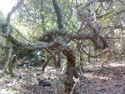 Phansad Wildlife Sanctuary