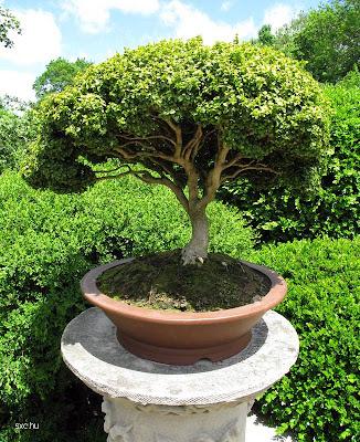 Rincón de un jardín