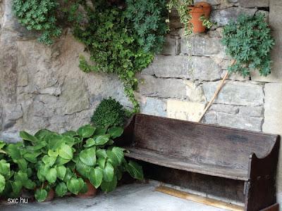 Banco en una casa rustica y muros de piedra con plantas