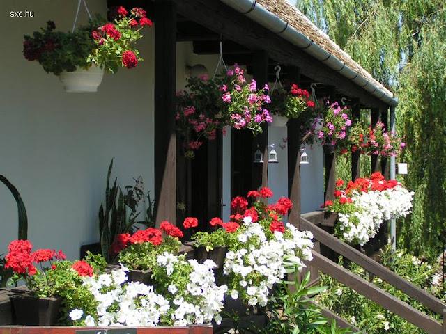 Casa rural con plantas