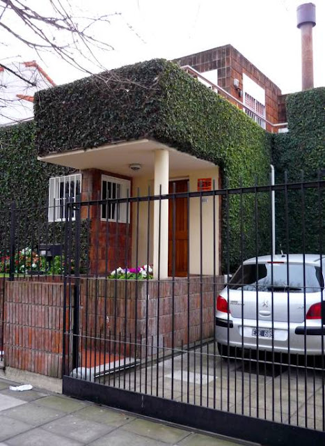 Planta trepadora en fachada