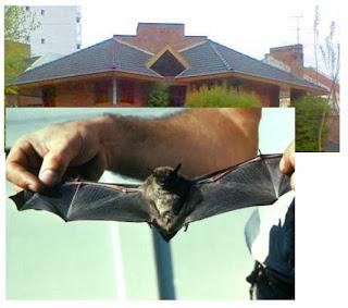 Comparación con murciélago