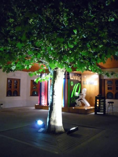 Árbol iluminado