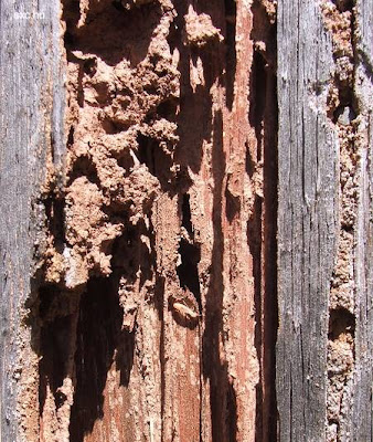Madera termitas