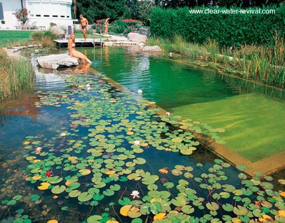 Arquitectura de casas las piscinas naturales con sus for Albercas naturales
