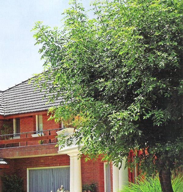 Arquitectura de casas jardines para enmarcar casas for Casa de jardin varca goa