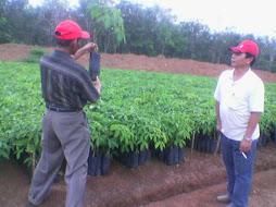 direktur utama PT Temam Lestari Mandiri menjelaskan tentang Produk PB 260