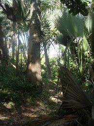 Bijilo Forestry Park