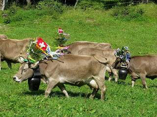Flower Power Cow On Marsch