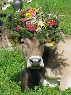 Shiva Sacre Cow Nandi