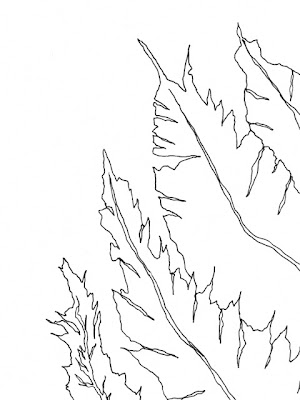 fern and silt line drawing