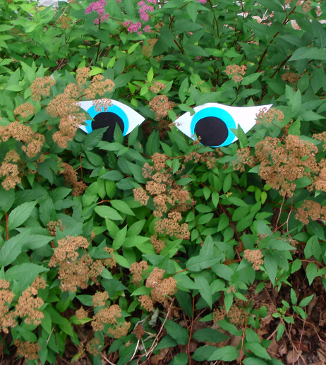 paper eyes in a bush