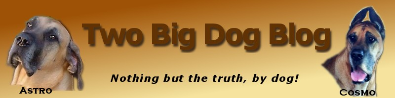 Two Big Dog Blog