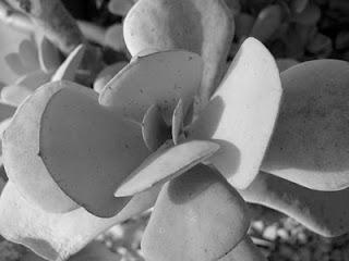 succulent, melbourne