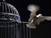 Eres libre, ¡vuela!