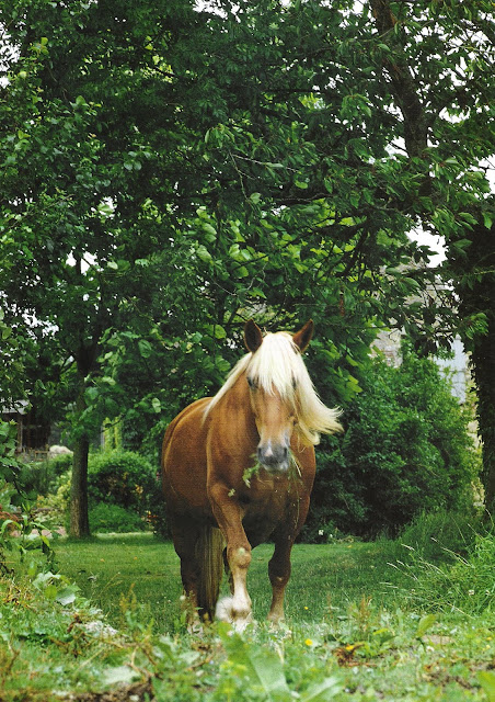 Horse Beautiful. Image via Côté Ouest, Aout-Sept 2003, edited by lb for linenandlavender.net