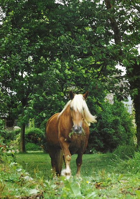 Horse Beautiful. Image via Côté Ouest, Aout-Sept 2003, edited by lb for linenandlavender.net