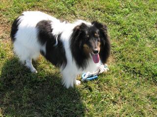 Cowspotdog Dog Depression But Feeling Good