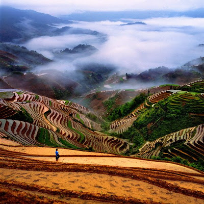 Rice Terraces Scenery