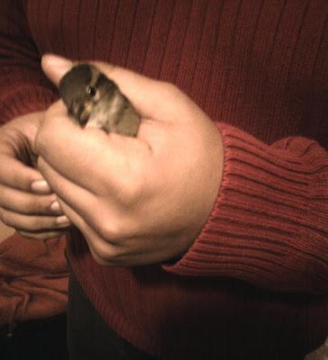 Pássaro na mão do Gordo