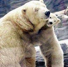 Mi abrazo de oso