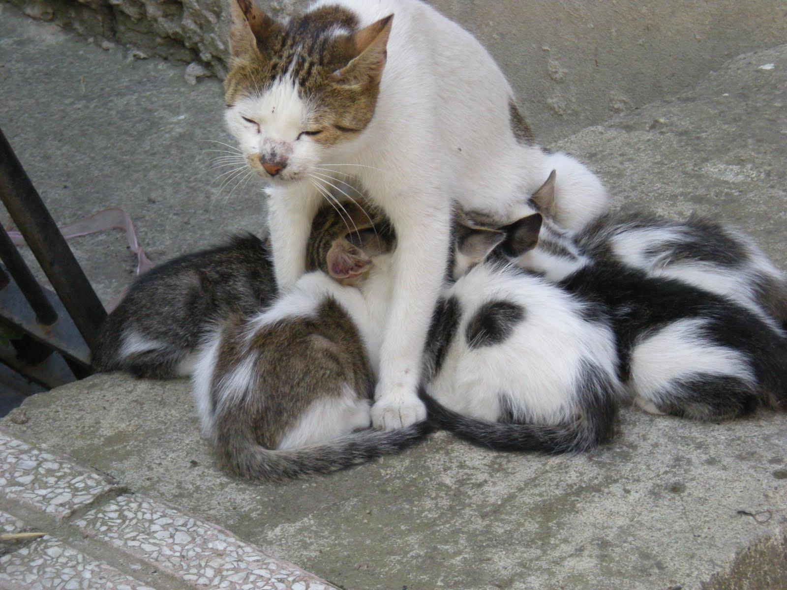 kedi Yalamak at teen kedi resimleri  teenvaginapicscom