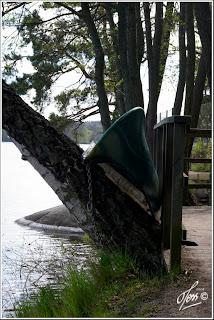 kanot i träd