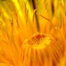Earths Springtime Medicine!