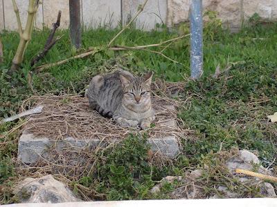 Kittywink