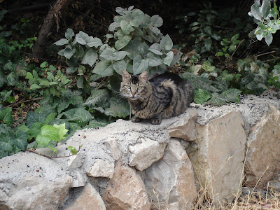 Tiger cat on stone wall