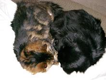 Tiger and Jasper