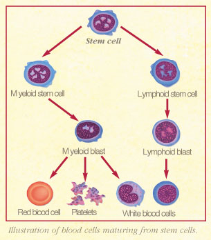 blood%2Bcancer Different Types Of Cancer Cells