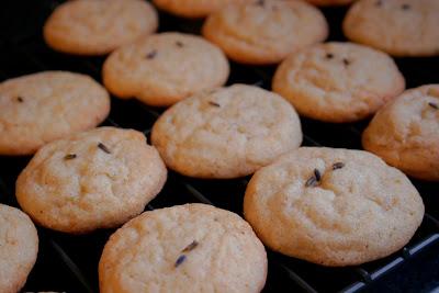 lemon lavender almond cookies, photo (and cookies) by Lauren Vogelbaum