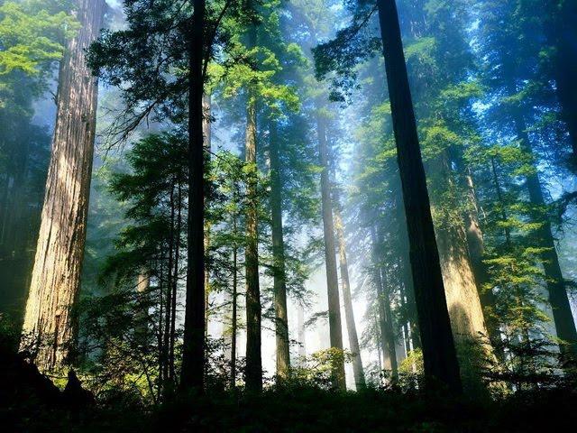 Eksotisnya Hutan Pinus Sreni