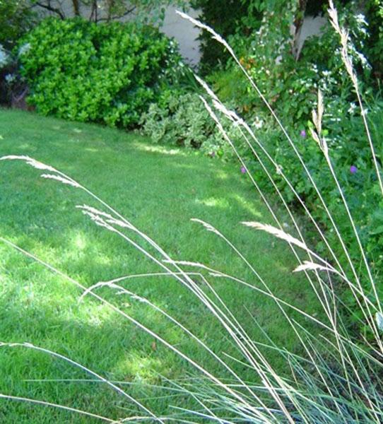 Un c sped nuevo con semillas plantas flores y jardin - Cuando plantar cesped ...