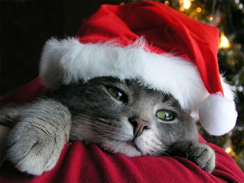 Vamos a ensayar la Navidad, a ver qué tal nos sale  Navidad+gato