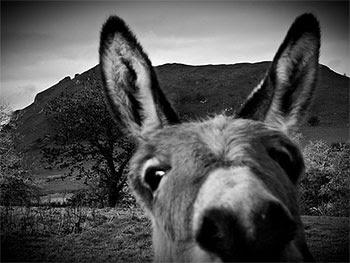 Aesop's Donkey
