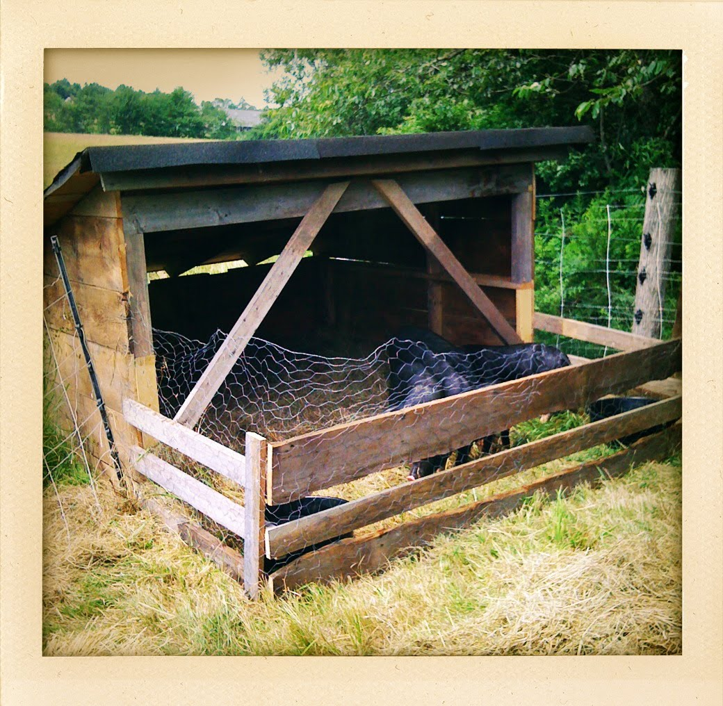 David 39 S Folly Farm The Pigs Have Arrived