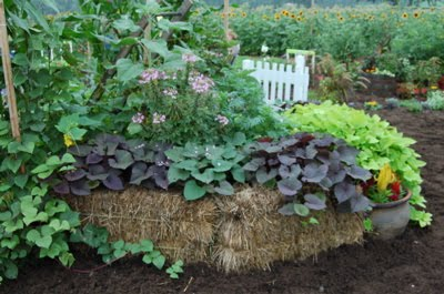 Michigan Backyard Gardener Straw Bale Gardening An Easy