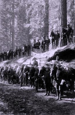 Yosemite - Fallen Monarch